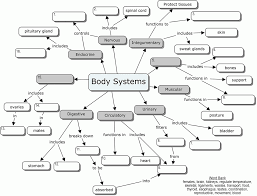 human body systems coloring pages coloring home