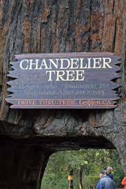 Chandelier Tree Address Driving Through A Tree Livin To Drive