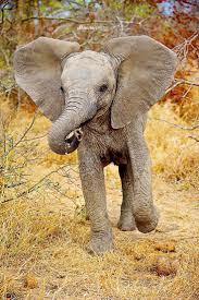 best 25 cute baby elephant ideas on pinterest baby elephant