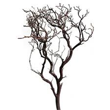manzanita branches centerpieces manzanita manzanita branches decorative wood branches dec