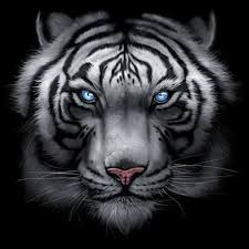 shirt custom design big in your majestic white tiger