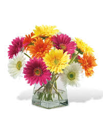 gerbera daisies decorate happy with gerbera silk flower centerpiece at petals