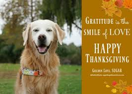 gratitude is the smile of happy thanksgiving