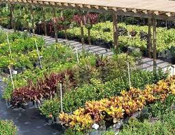 Nursery Plant Supplies by Top Spots To Buy Gardening Supplies In South Florida Cbs Miami