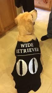 Lab Halloween Costume Ideas 28 Adorable Dogs Winning Halloween Dog Halloween Halloween