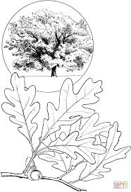 white oak tree coloring page free printable coloring pages
