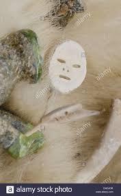 carving soapstone canada nunavut qikiqtaaluk cape dorset soapstone carving on