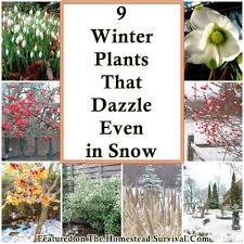 best 25 winter plants ideas on pinterest leaf photography