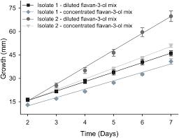 flavan 3 ols in norway spruce biosynthesis accumulation and