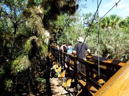 Under Canopy Rainforest by From Canopy Walk To Gator Filled Waters This Florida Park Offers