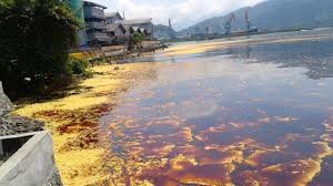 Minyak Cpo ketika puluhan ton minyak sawit tumpah di perairan teluk bayur