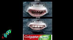Funny Shark Meme - 10 most funniest shark memes youtube