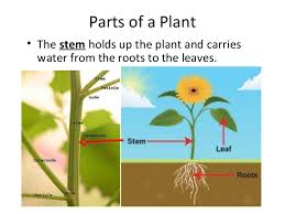 parts of a plant plant life cycle teach