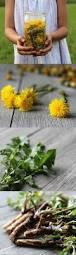 dandelion for detox digestion and hormone balance dandelions