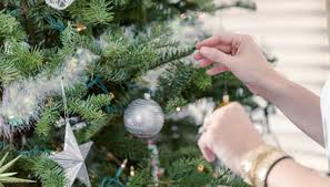 live christmas trees for sale how to take care of a live christmas tree