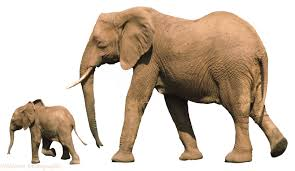 african elephant with baby photo wp00513