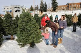 christmas tree permits available blaine county mtexpress com
