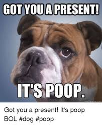 Dog Poop Meme - got youa present t s poop quickmemecom got you a present it s poop