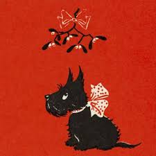 the canine store v a cards scottie pack of 10