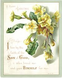 greetings card religious text primula flower