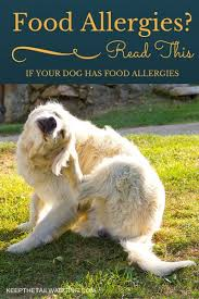 read this if your dog has food allergies keep the tail wagging