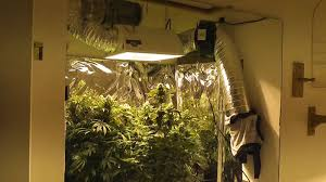 1000 watt hps light 1000w mh hps grow week 8 flowering youtube