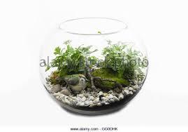 terrarium stock photos u0026 terrarium stock images alamy