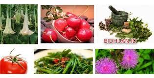 Obat Tidur Herbal 20 macam obat tidur alami sebagai obat penenang tanpa efek sing