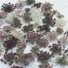 best seeds 2016 new cutting flowers from floret seeds gardenista