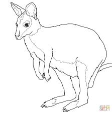 coloring pages animals kangaroo coloring pages for kids kangaroo