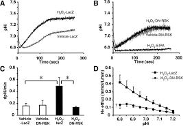 inhibiting p90 ribosomal s6 kinase prevents na h exchanger