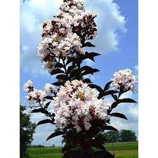 flowering ornamental trees trees the home depot