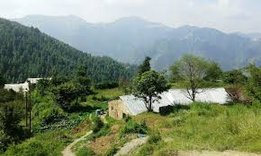 1 bigha land for sale near mashorbra naldehra shimla property