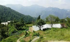 1 bigha land for sale near mashorbra naldehra shimla property