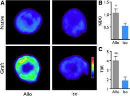 nanoparticle pet ct detects rejection and immunomodulation in