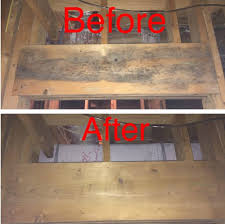 basement mold thebridgesummit co