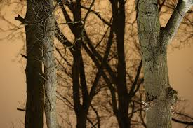 free images nature forest outdoor branch winter sunlight