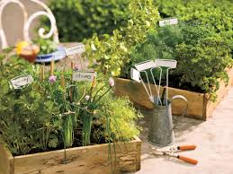 colorful flower gardens how to grow chives southern living