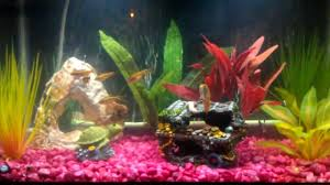 interior cool picture of decorative colorful fish tank for home