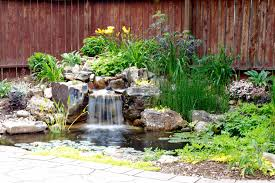 5 elements of a healthy low maintenance pond in colorado springs