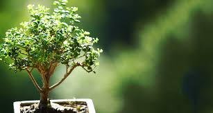 Best Plants For No Sunlight Bonsai Tree Care For Beginners U2014everything You Need To Know