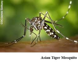 Diseases In Plants And Animals - mosquitoes and disease