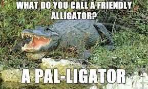 Alligator Meme - bad pun alligator meme on imgur