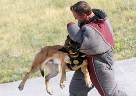 belgian sheepdog idaho cheyenne police department k9 officers get training on drug to