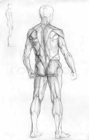 Anatomy Of Human Back Muscles Hand Drawn Pencil Sketch Illustration Of The Male Human Muscle