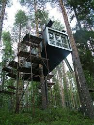 magic tree house in the middle of a fir forest and few ideas for