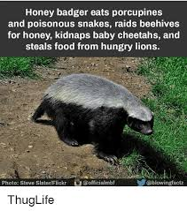 Meme Honey Badger - 25 best memes about honey badgers honey badgers memes