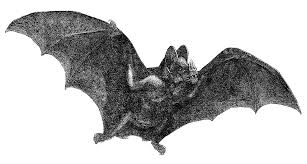 halloween bat png antique images free halloween clip art vintage vampire bat in