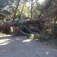 ls that look like trees red axe 22 photos tree services redwood city ca phone
