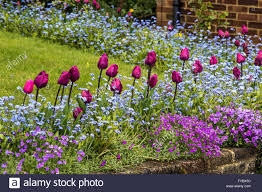 spring flower beds in a front garden stock photo royalty free